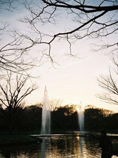 夕日と噴水@代々木公園